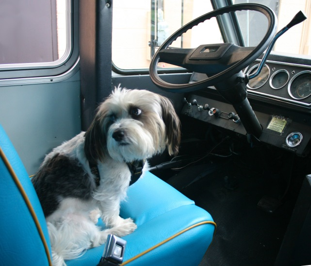1603 Sparky at the wheel.jpg